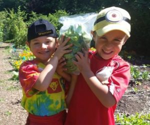 Kids growing organic lettuce