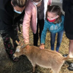 Petting a Goat at the Petting Zoo
